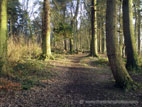 Woodland path through trees with winter sunshine
