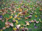 Colourful Autumn leaves on grass